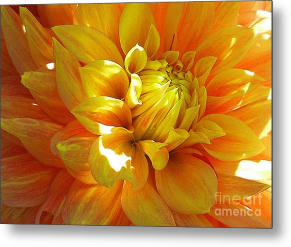 The Heart Of A Dahlia Metal Print