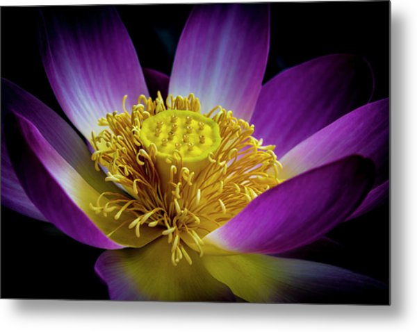 The Heart Of The Lily Metal Print