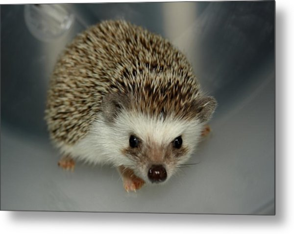 The Hedgehog Metal Print