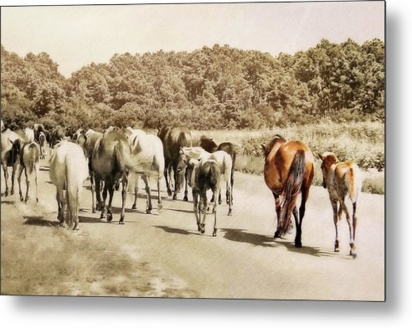 The Herd Metal Print by JAMART Photography