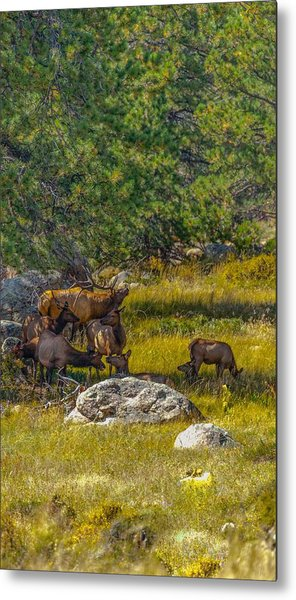 The Herd Keeper Metal Print