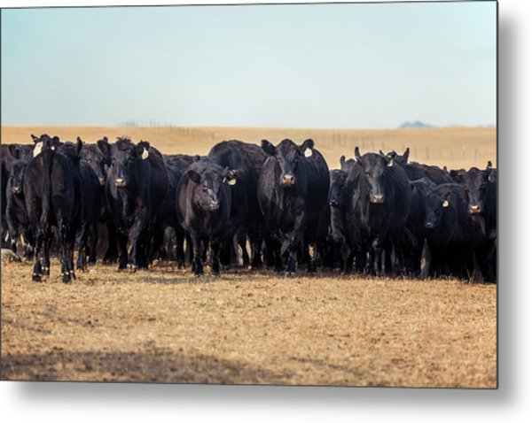 The Herd Rushes In Metal Print