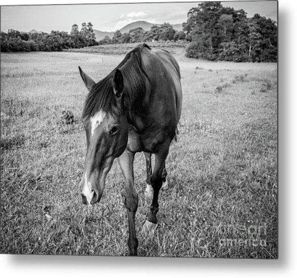 the Horses of Blue Ridge 3 Metal Print