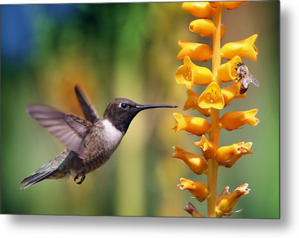 The Hummingbird And The Bee Metal Print