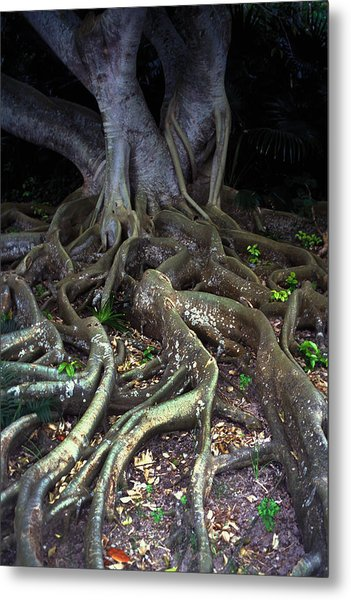 The Hungry Roots Metal Print