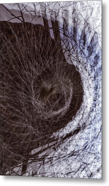 The Inner Ear Of Trees Metal Print by Deborah Hughes