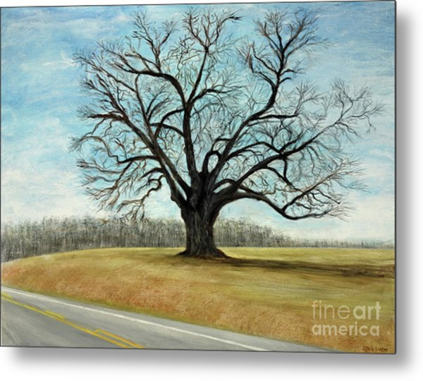 The Keeler Oak Metal Print