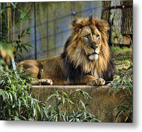 The King Metal Print by Keith Lovejoy