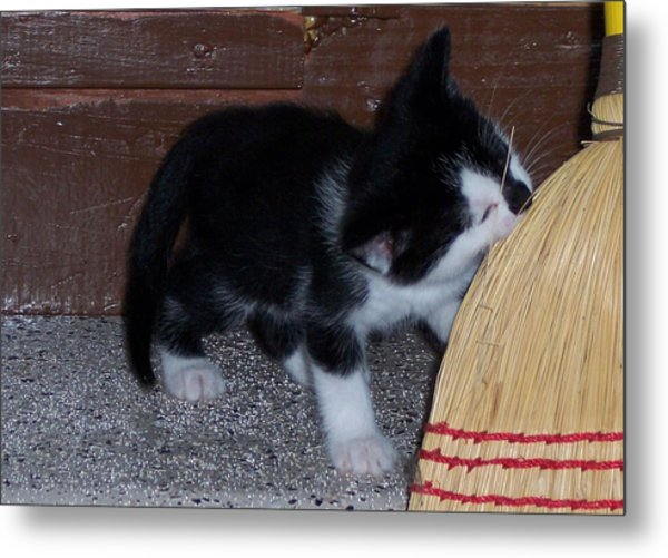 The Kitten And The Broom Metal Print