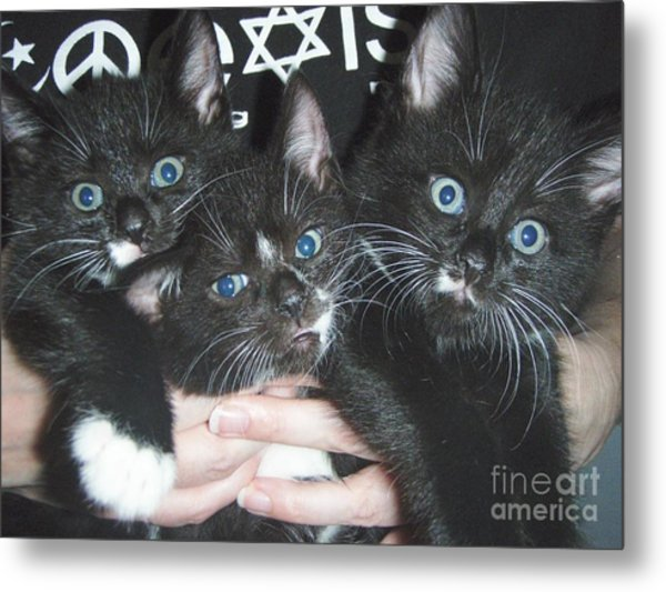 The Kittidiots Metal Print