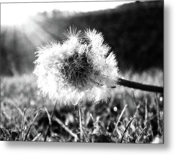 The Last Dandelion Metal Print