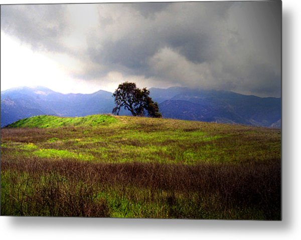 The Last Oak Metal Print