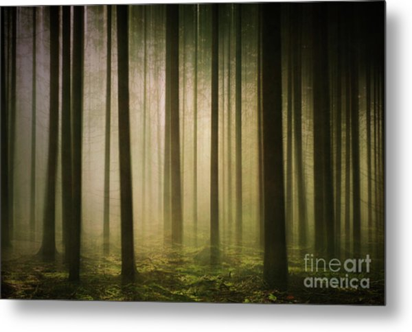 The Light In The Woods Metal Print