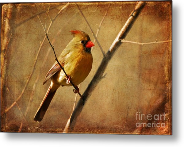 Metal Print featuring the photograph The Little Mrs. by Lois Bryan