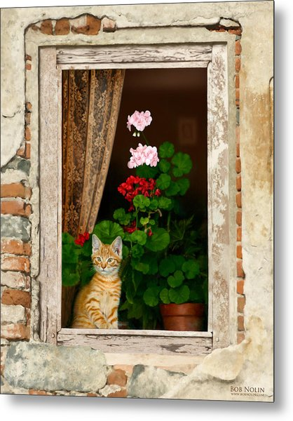 The Little Tuscan Tiger Metal Print