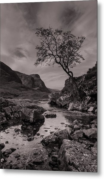 The Lone Tree Of Glencoe Metal Print by Ben Spencer
