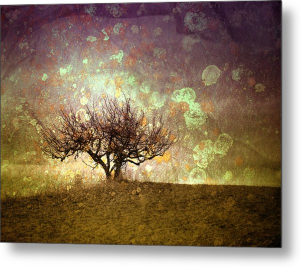 The Lone Tree Metal Print