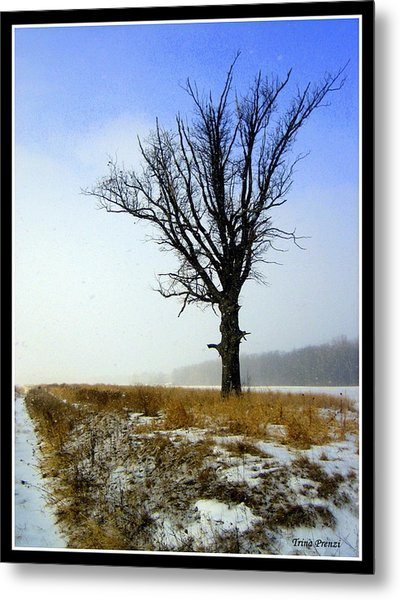 The Lone Tree Metal Print by Trina Prenzi