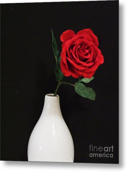 The Lonely Red Rose Metal Print by Marsha Heiken