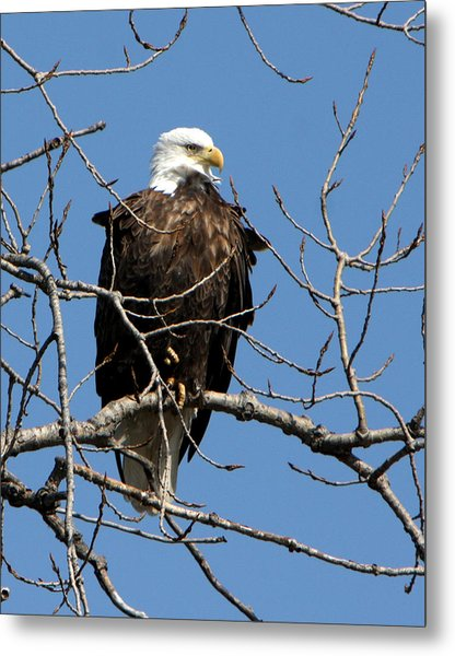 The Lookout Metal Print by Dave Clark