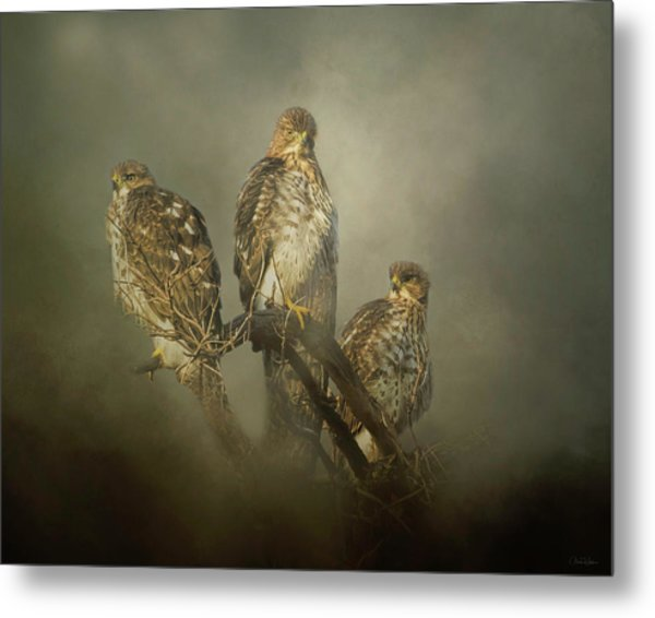 The Lookouts Metal Print