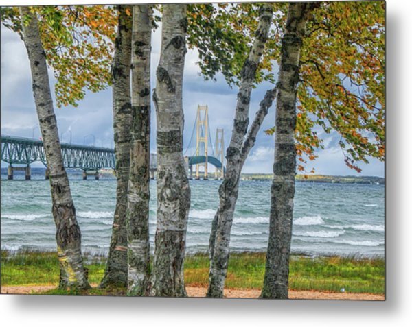 The Mackinaw Bridge By The Straits Of Mackinac In Autumn With Birch Trees Metal Print