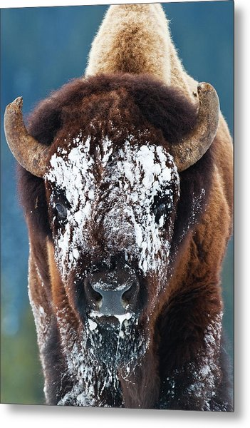 The Masked Bison Metal Print