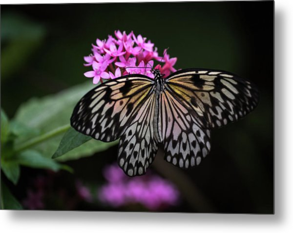 The Master Calls A Butterfly Metal Print