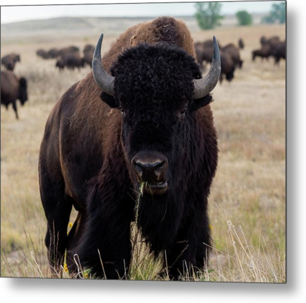 The Mighty Bison Metal Print