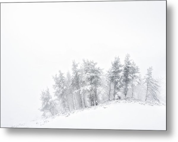 The Minimal Forest Metal Print