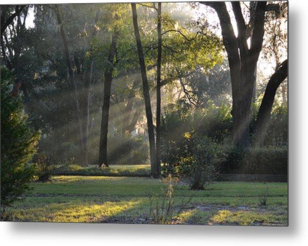 The Morning Sunlight Comes Shining Through Metal Print