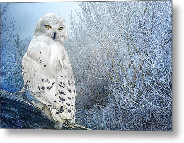 The Mystical Snowy Owl Metal Print