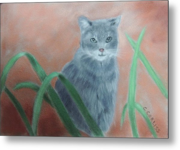 The Neighbor's Cat Metal Print