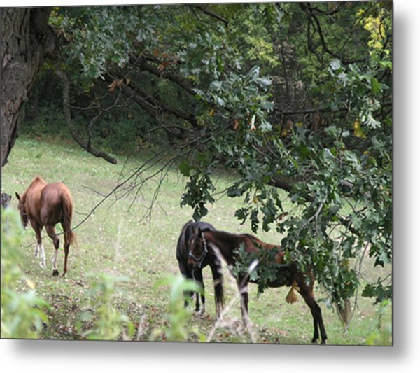 The Neighbors Horses Metal Print by Janis Beauchamp