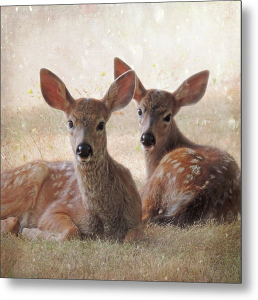 Metal Print featuring the photograph The Observers by Sally Banfill