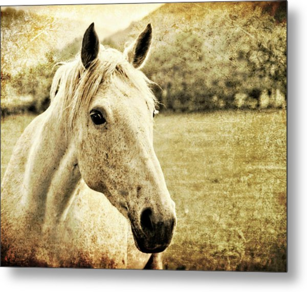 The Old Grey Mare Metal Print