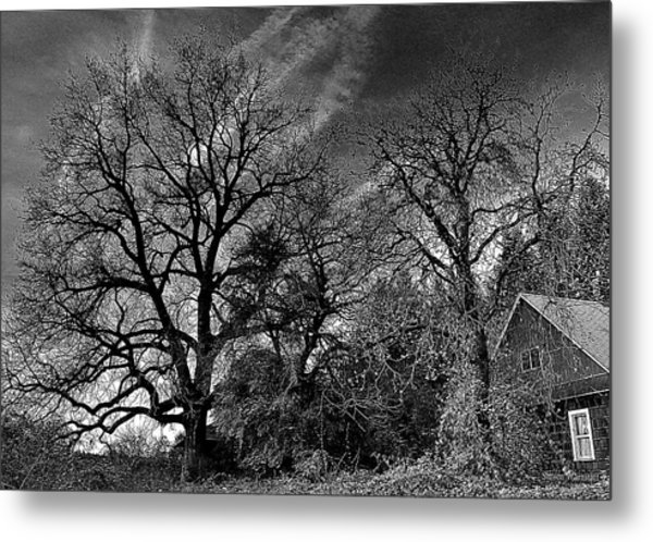 The Old Oak Tree Metal Print