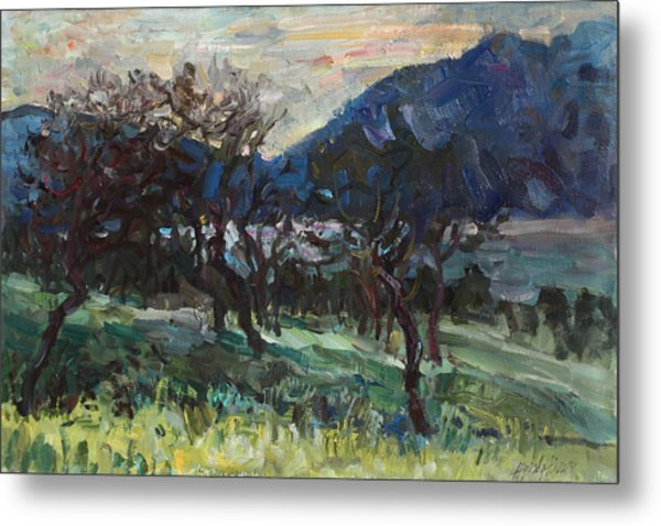 The Old Olive Trees Metal Print
