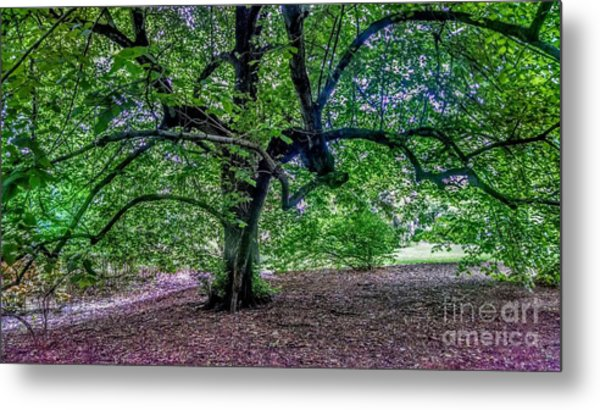 The Old Tree At Frelinghuysen Arboretum Metal Print