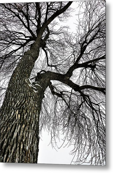 Metal Print featuring the photograph The Old Tree by Cristina Stefan