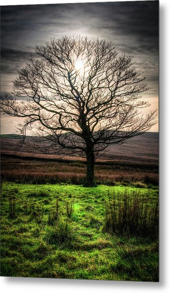 The One Tree Metal Print