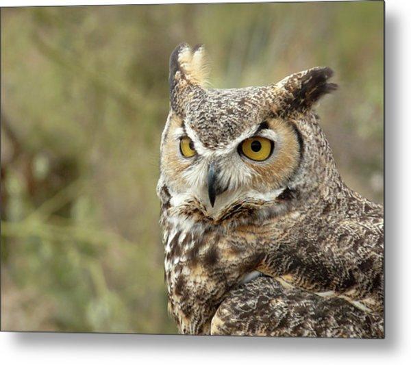 The Owl Metal Print