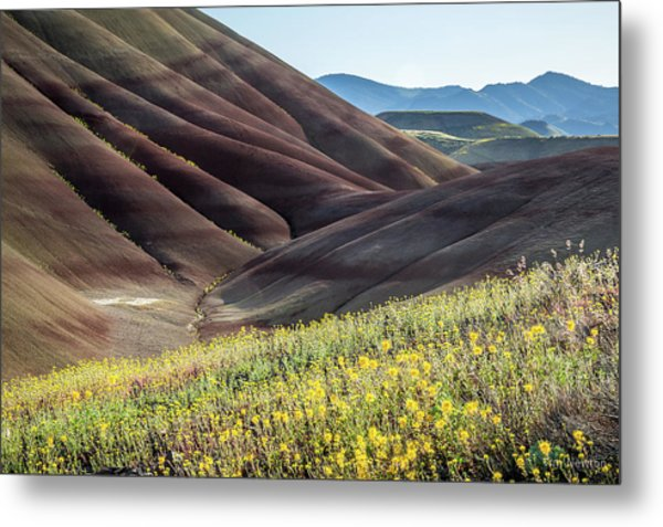 Metal Print featuring the photograph The Painted Hills In Bloom by Tim Newton