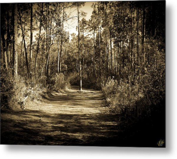 The Path Before Me, No. 6 Metal Print