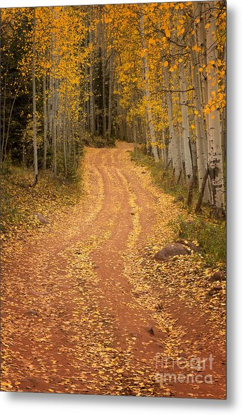 The Pathway To Fall Metal Print