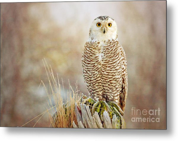 The Perch Metal Print