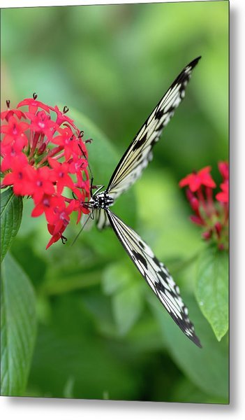 The Perfect Butterfly Land Metal Print