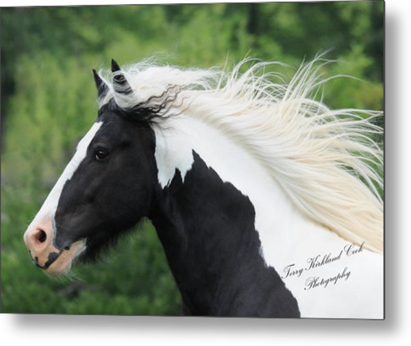 The Perfect Stallion  Metal Print by Terry Kirkland Cook