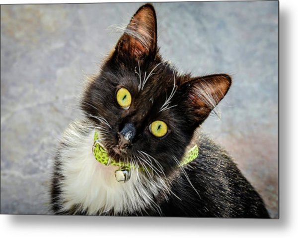 The Portrait Of A Cat Metal Print