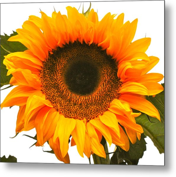 The Prettiest Sunflower Metal Print